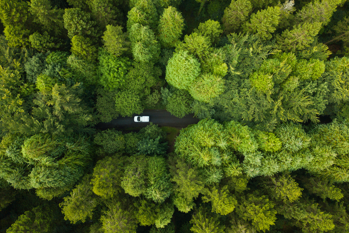 Birds eye view of road through forest