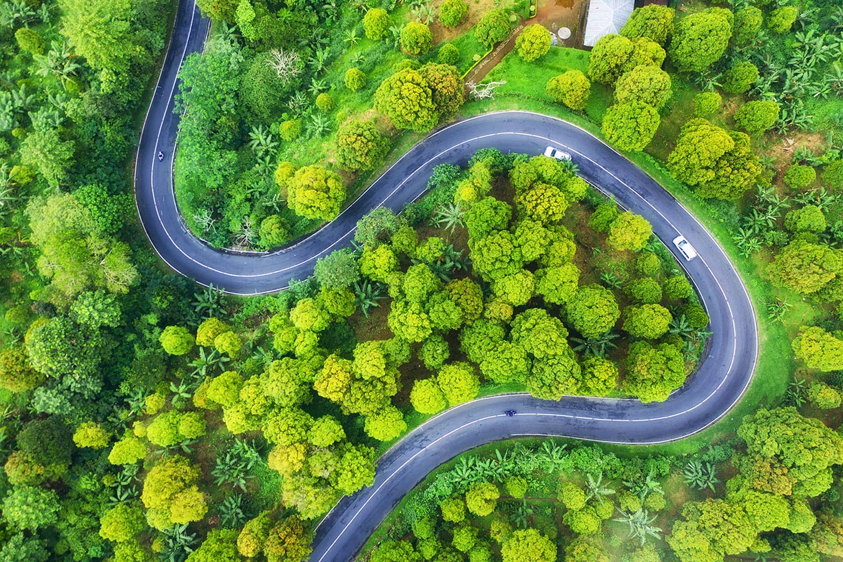 Two lane road winding through forest
